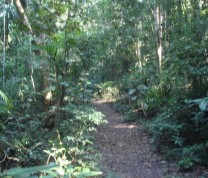 Environmental Conservation Trail Jungle