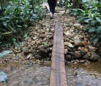 Environmental Conservation Crossing Three
