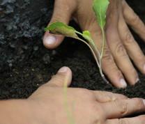 Community Center Gardening Hands Planting