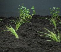 Community Center Gardening Plants