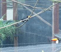 Community Center Wild Life Visit Toucan