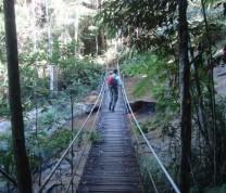 Environmental Conservation Bridge Nature