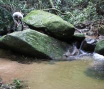 Environmental Conservation Rocks