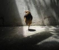 Wildlife Conservation Blind Bird