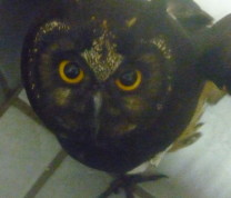 Wildlife Conservation Owl Eyes